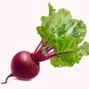 야채 알 비트 비트잎 콜라비 채소 종자 씨앗 200립